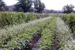 The Business of Cover Crops