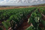 Interviews in Sustainable and Organic Agriculture on Kaua'i
