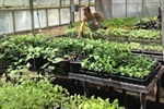 Interviews in Sustainable and Organic Agriculture on O'ahu