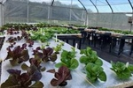 Pop In for Hydroponics
