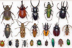 """An Inordinate Fondness for Beetles"""