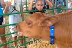Head to the Hawaii State Farm Fair