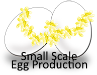 Small Scale Egg Production