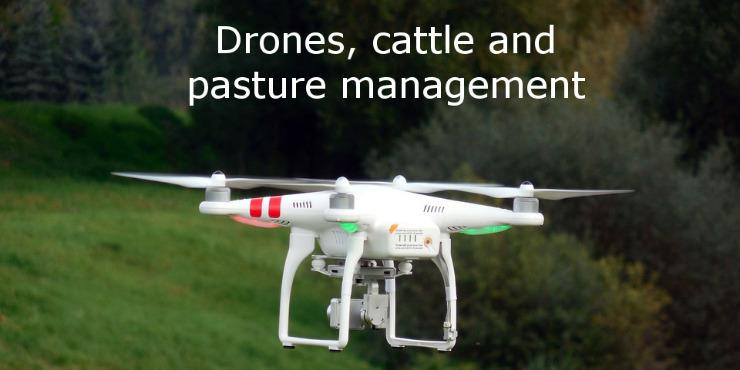 Drone flying over pasture in Kamuela