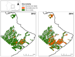 Assessing spatial distribution, stand impacts and rate of Ceratocystis fimbriata induced ʻōhiʻa (Metrosideros polymorpha) mortality in a tropical wet forest, Hawai'i Island, USA.